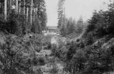Das Schützenhaus inmitten des (alten;) Waldes